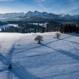 Zimowe Tatry, widok z Rzepisk (drzewa)