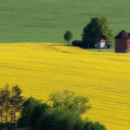 Wiatrak na Morawach wśród pól rzepaku